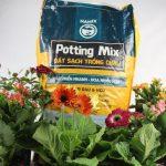 Top 3 loại đất sạch trồng rau - hoa - cây kiểng chất lượng tại TP HCM
