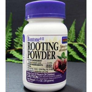 rooting powder trước