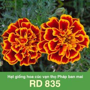 Hạt giống hoa cúc vạn thọ Pháp ban mai RD 835