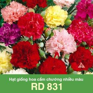 Hạt giống hoa cẩm chướng nhiều màu RD 831