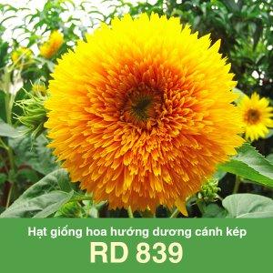 Hạt giống hoa hướng dương cánh kép RD 839