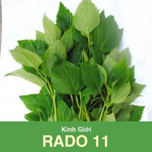 hạt giống kinh giới RADO 11