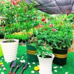 Quy trình trộn giá thể trồng hoa hồng