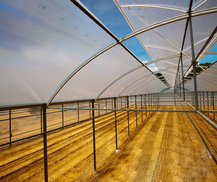 Màng nhà kính nông nghiệp công nghệ cao