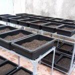 Một số loại khay nhựa, chậu nhựa trồng rau, trồng cây tại nhà