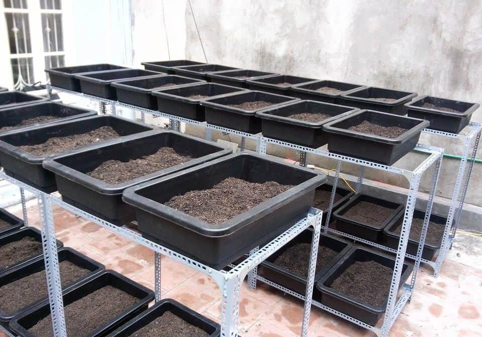 Khay nhựa trồng rau
