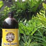 Công dụng mật rỉ đường: ủ phân bón hữu cơ cho cây trồng