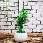 6 yếu tố trong cách chăm sóc cây cảnh trong nhà để bàn đúng cách