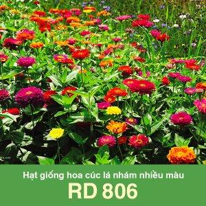 Hạt giống hoa cúc lá nhám nhiều màu Rado 806 1 1