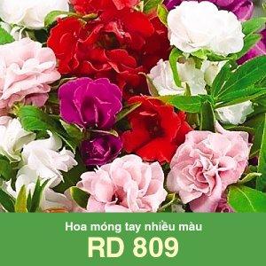 Hoa móng tay nhiều màu Rado 809 1 1
