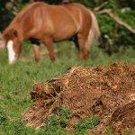 Cách ủ phân bón hữu cơ tại nhà