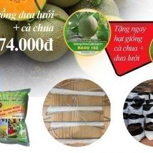 combo trồng dưa lưới cà chua 474.000đ