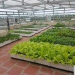 Một số kinh nghiệm và lưu ý khi trồng rau sạch tại nhà