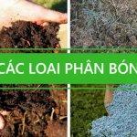 Các loại phân bón trồng rau sạch tại nhà