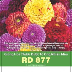 Giống Hoa Thược Dược Tổ Ong Nhiều Màu RD 877