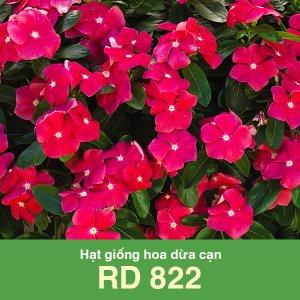 Hạt giống hoa dừa cạn RD 822