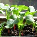 Cách cải tạo đất vườn sau thu hoạch để trồng rau tại nhà