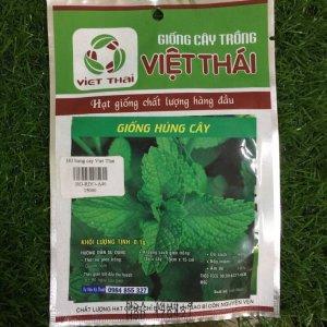 Giống Húng Cây Việt Thái