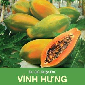 HG du du ruot do Vinh Hung