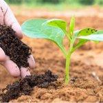 Lợi ích của phân bón hữu cơ phân chuồng đã qua xử lí