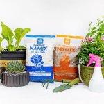 Perlite vs Vermiculite - giá thể trồng cây trong mùa mưa