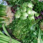 Các loại rau gia vị hữu ích dễ trồng cho khu vườn nhà bạn