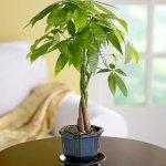 Top 10 loại cây để bàn hợp phong thủy cho văn phòng