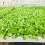 Nồng độ dinh dưỡng tiêu chuẩn của các loại cây trồng