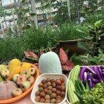 Chế phẩm sinh học Trichoderma cho vườn rau hữu cơ nhà bạn