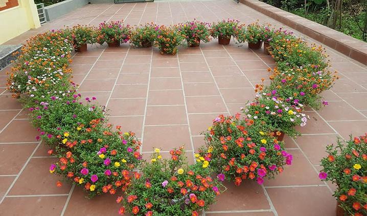 Cách chăm sóc hoa mười giờ