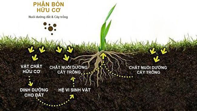 Tác dụng phân hữu cơ vi sinh cho khu vườn luôn khỏe mạnh