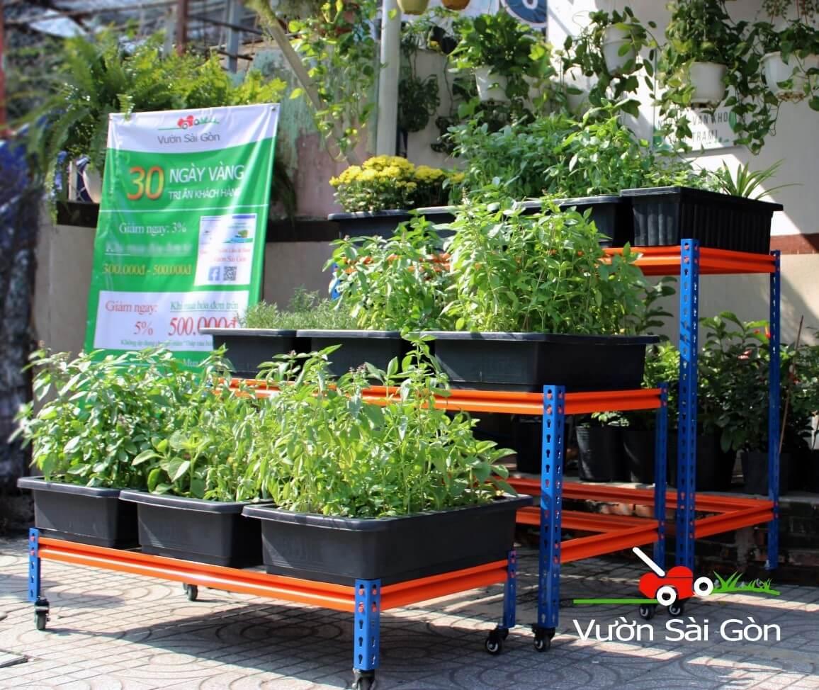 Kệ trồng rau Vườn Sài Gòn