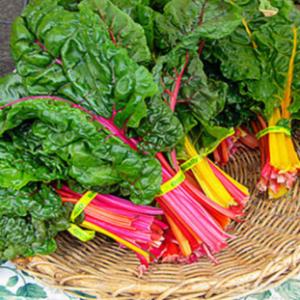 Hạt giống rau ăn lá