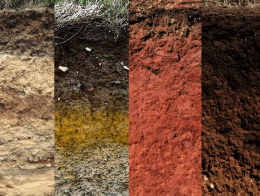pH đất ảnh hưởng đến cây trồng