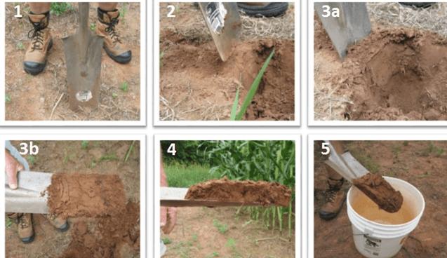 Cách lấy mẫu đất đo độ pH