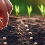 Cách lựa chọn đất phù hợp cho các loại cây khác nhau