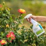 Cách phòng và trị bọ trĩ hại cây trồng