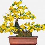 Top 10 loại hoa trồng chậu chơi Tết mang lại niềm vui và tài lộc