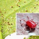 Phòng trừ nhện đỏ hại cây trồng