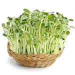 Top những loại rau nên trồng sử dụng trong ngày Tết