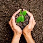 Các loại đất trồng cây phổ biến và chất lượng nhất hiện nay không thể bỏ qua