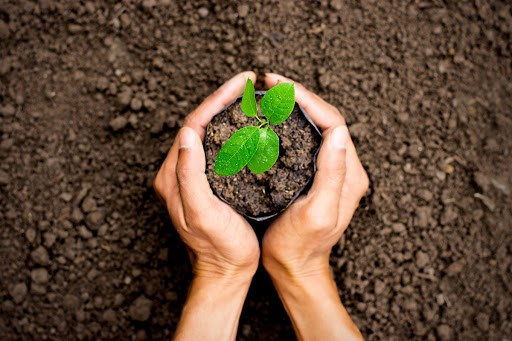 Lựa chọn loại đất phù hợp để trồng cây
