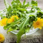 Cách trồng cây Bồ Công Anh đơn giản tại nhà