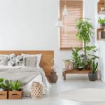 4 Lỗi thường gặp khi trồng cây trong nhà