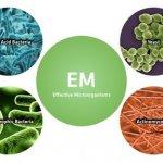 Chế phẩm sinh học trong bảo vệ thực vật