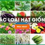 Địa chỉ mua hạt giống chất lượng tại Hồ Chí Minh