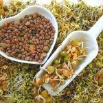 Rau mầm - Có phải loại rau giàu dinh dưỡng phù hợp cho bé?