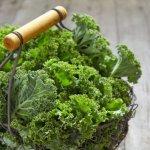 Dinh dưỡng từ cây Cải xoăn Kale và cách chế biến