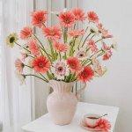 Hướng dẫn trồng hoa Đồng Tiền đơn giản tại nhà
