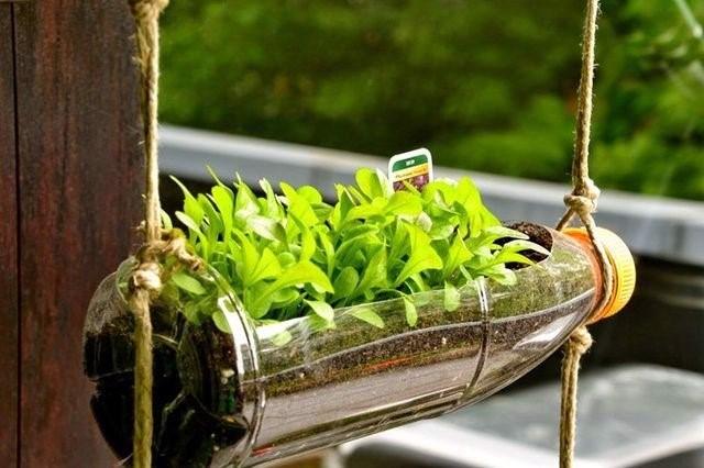 Chậu trồng cây từ chai nhựa